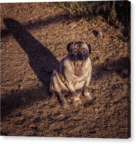 Pug art page 38 of 47 fine art america pug canvas print its a pug life by tammy bryant altavistaventures Images