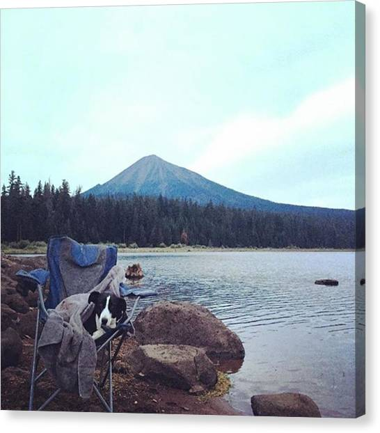 Trout Canvas Print - It's A Ruff Life 🐾 by Stacy Hughes