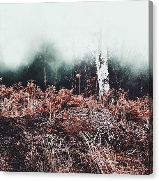 Foggy Forests Canvas Print - It's Monday - Have Some Fog. #nature by Kris K