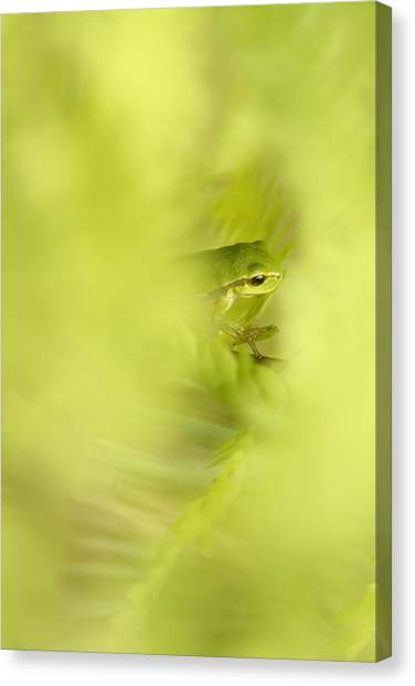 Blending Canvas Print - It's Not Easy Being Green - Tree Frog Hiding  by Roeselien Raimond