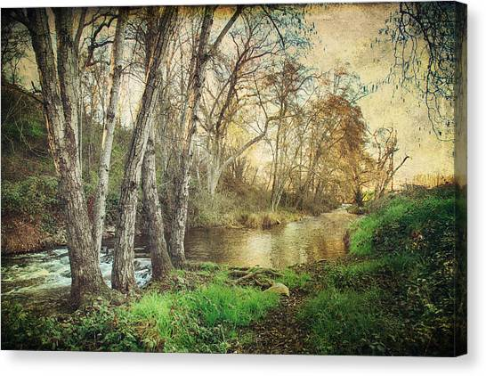 Ca Canvas Print - It's Passed Me By by Laurie Search