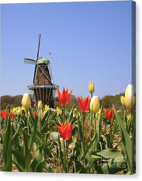 Its Tulip Time Canvas Print by Robert Pearson