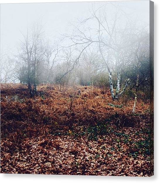 Foggy Forests Canvas Print - It's Two A Day Kind Of Day. #nature by Kris K