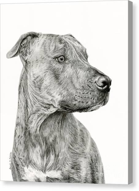 Pit Bull Canvas Print - Ittie Bittie Pittie by Sarah Batalka