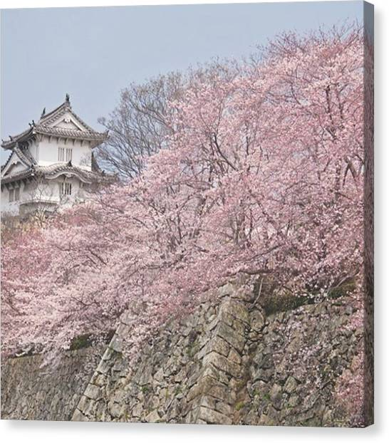 Japanese Canvas Print - I've Been Fortunate Enough To Be In by Margaret Goodwin