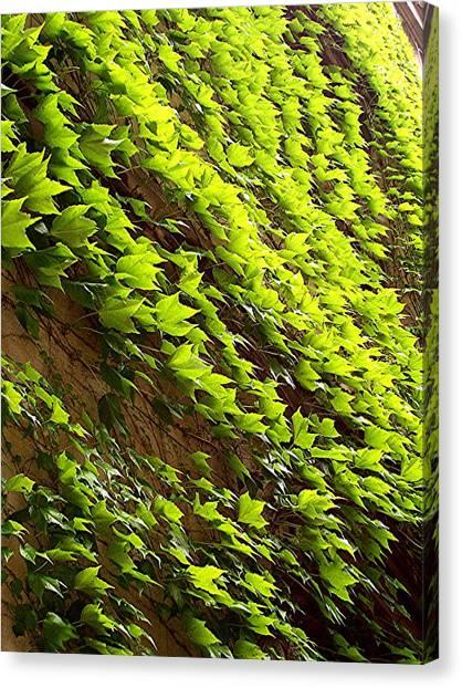 Ivy League-ivy Lines Canvas Print by Caroline  Urbania Naeem