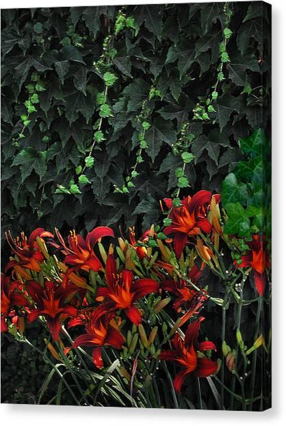 Ivy Over Canvas Print by Richard Gordon