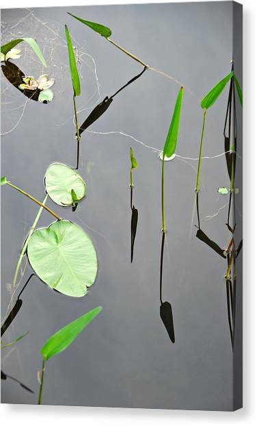 Izzy's Pond Close Up Canvas Print