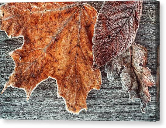 Jack Frost's Touch Canvas Print