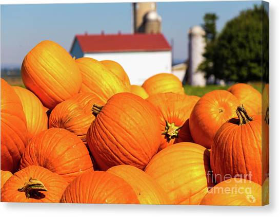Jack-o-lantern Pumpkins At Farm Canvas Print