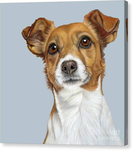 Canvas Print featuring the drawing Jack Russell Terrier by Donna Mulley