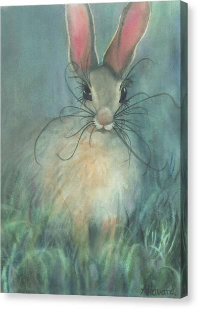 Jack-the-rabbit Canvas Print