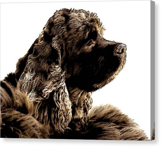 Cocker Spaniels Canvas Print - Jack Waits by Norman Andrus
