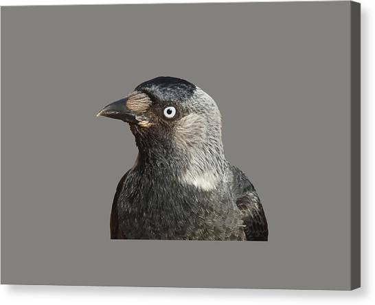 Jackdaw Corvus Monedula Bird Portrait Vector Canvas Print