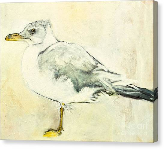 Jackson The Seagull Canvas Print