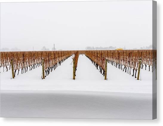 Jackson-triggs Winery Niagara Estates Canvas Print