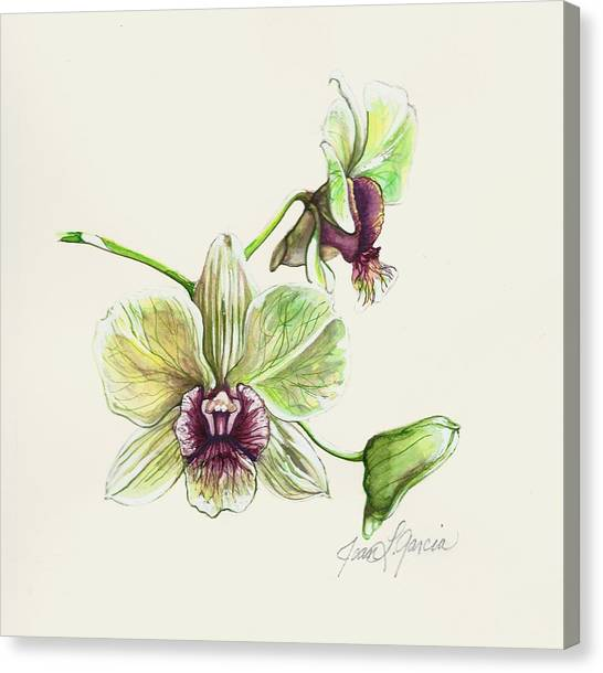Jade Dendrobium Canvas Print