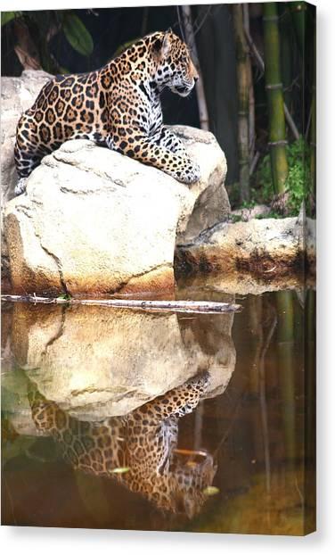 Jaguar At Rest Canvas Print