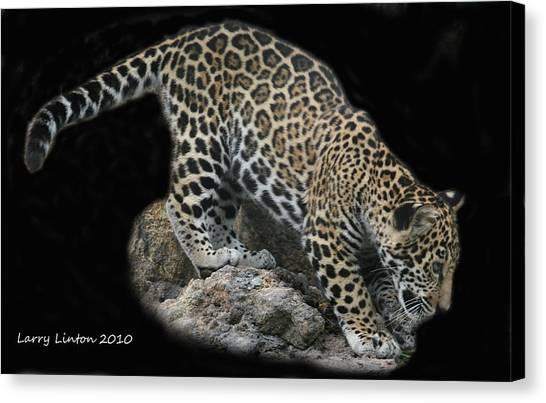 Jaguar Cub Canvas Print by Larry Linton