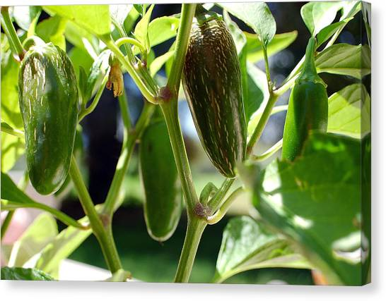 Jalapenos Canvas Print by Heather S Huston