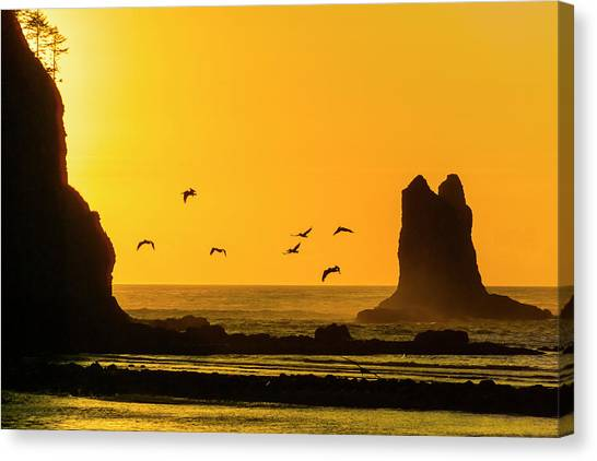 James Island And Pelicans Canvas Print
