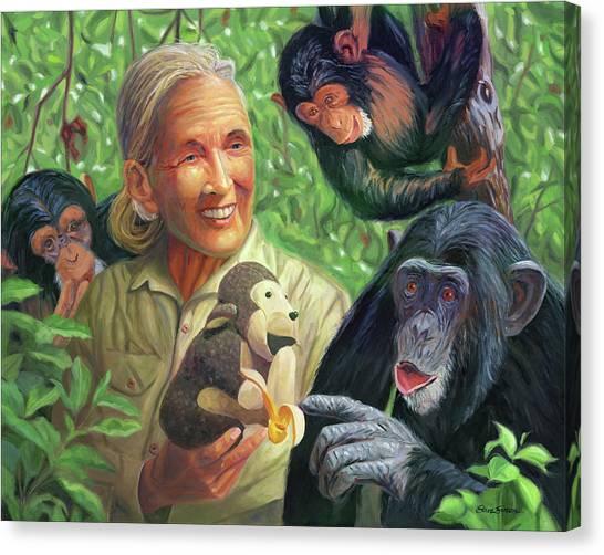 Chimpanzees Canvas Print - Jane Goodall by Steve Simon