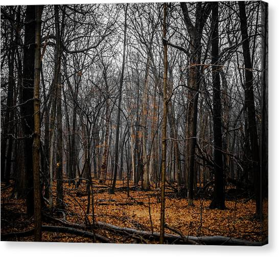 January Forest Rains Canvas Print
