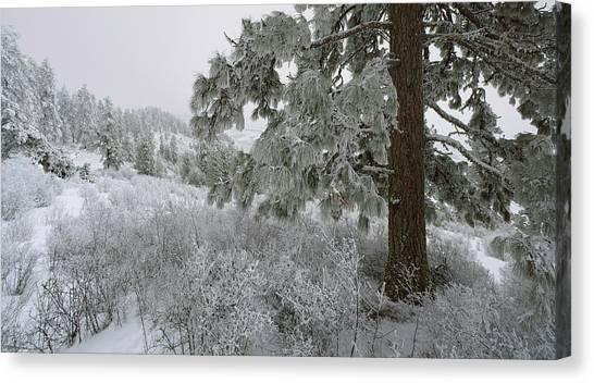 January On Kamiak Butte Canvas Print by Jerry McCollum