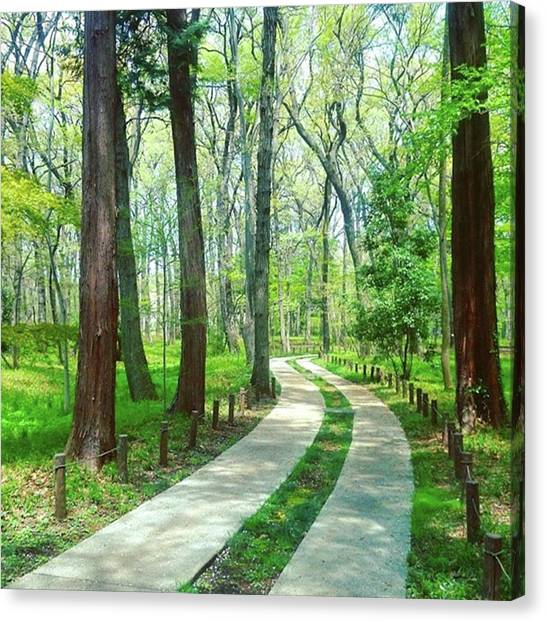 Forest Paths Canvas Print - #japan #forest #wood #path #green by Naonori Rinoh