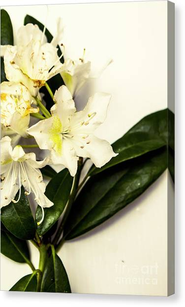 Japanese Canvas Print - Japanese Flower Art by Jorgo Photography - Wall Art Gallery