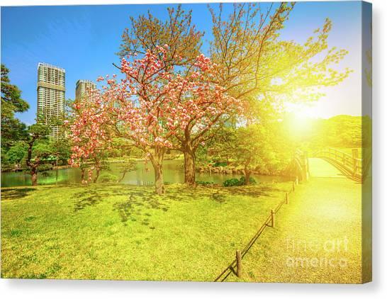 Japanese Garden Cherry Blossom Canvas Print