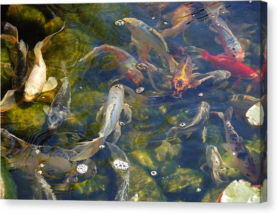 Canvas Print - Japanese Koi Fish by Susan Heller