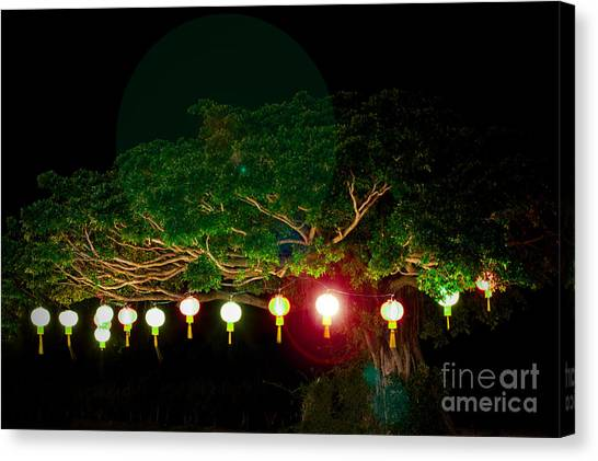 Japanese Lantern Tree Canvas Print