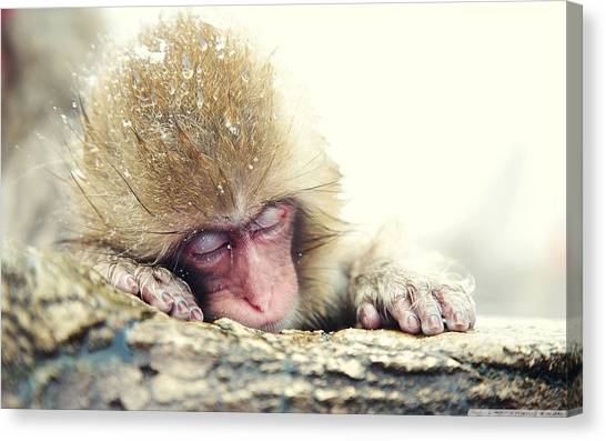 Ostriches Canvas Print - Japanese Macaque by Mariel Mcmeeking