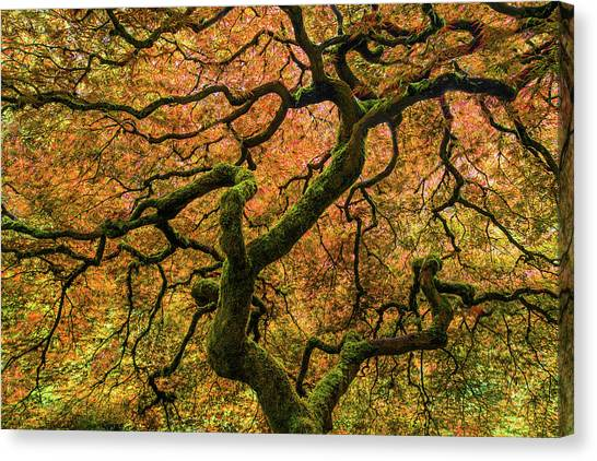 Oregon Canvas Print - Japanese Maple Tree by Larry Marshall