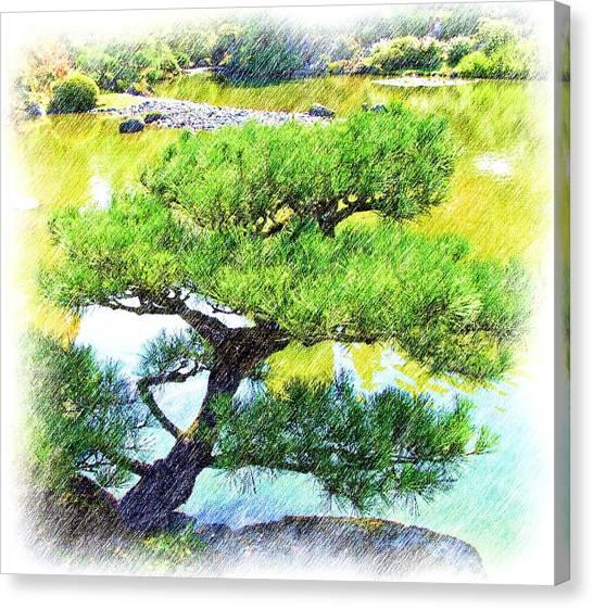 Japanese Tree Canvas Print by Ralph Liebstein