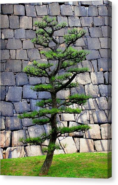 Japanese Tree Canvas Print