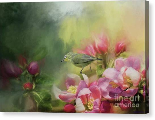 Japanese White-eye On A Blooming Tree Canvas Print