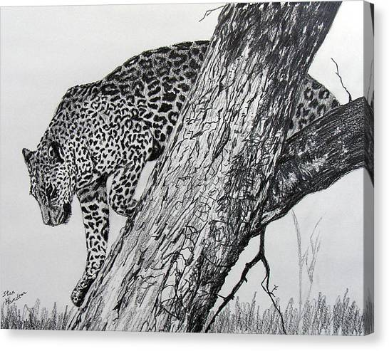Jaquar In Tree Canvas Print
