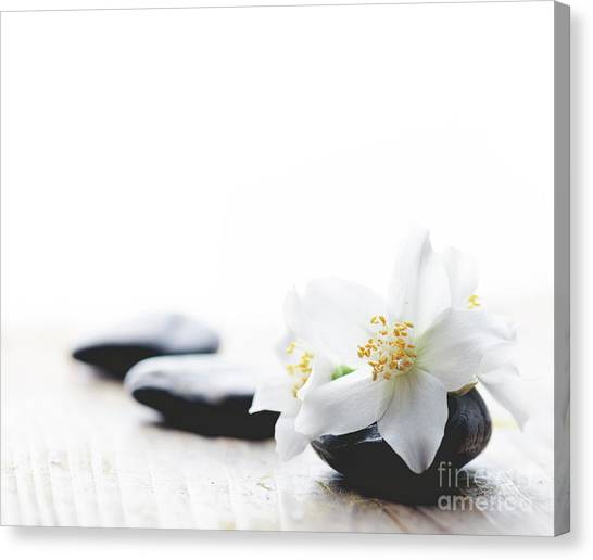Jasmine Flower On Spa Stones Canvas Print
