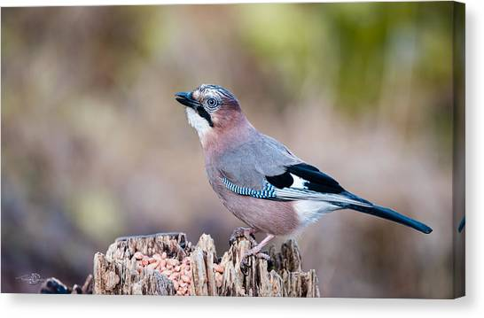 Jay In Profile Canvas Print