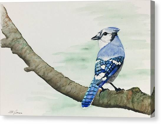 Jay In The Pine Canvas Print