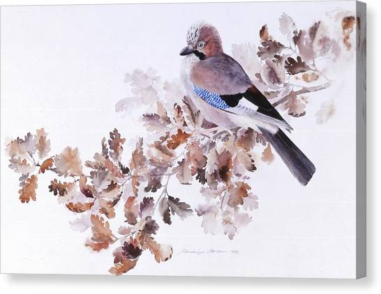 Jay On A Dried Oak Branch Canvas Print