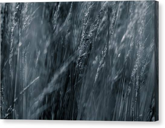 Jazz Grass -  Canvas Print