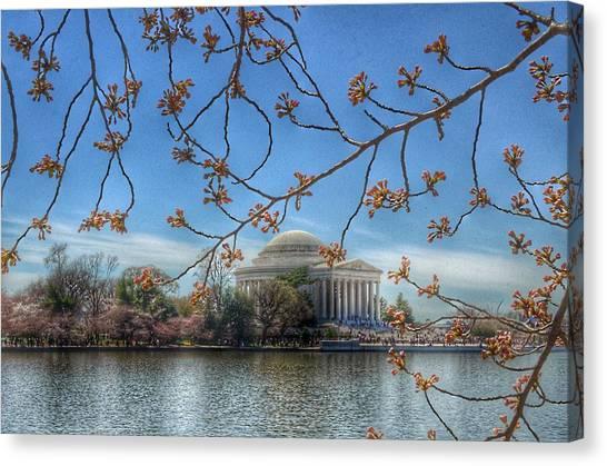 Jefferson Memorial Canvas Print - Jefferson Memorial - Cherry Blossoms by Marianna Mills