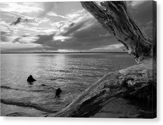 Jekyll Driftwood At Sunset In Black And White Canvas Print
