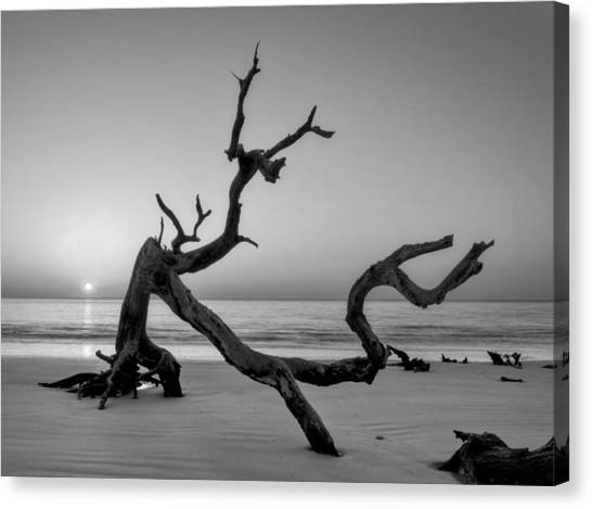 Jekyll Island Driftwood In Black And White Canvas Print