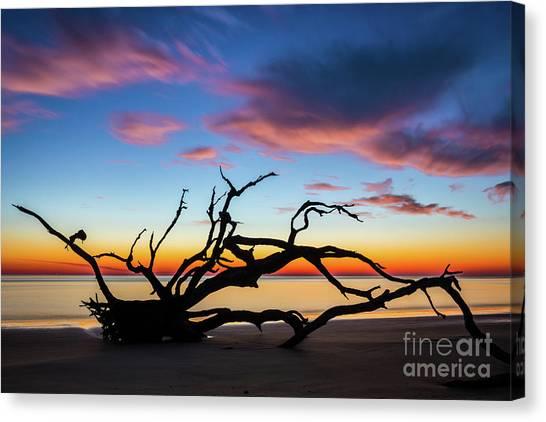 Jekyll Island Sunrise On Driftwood Beach Canvas Print