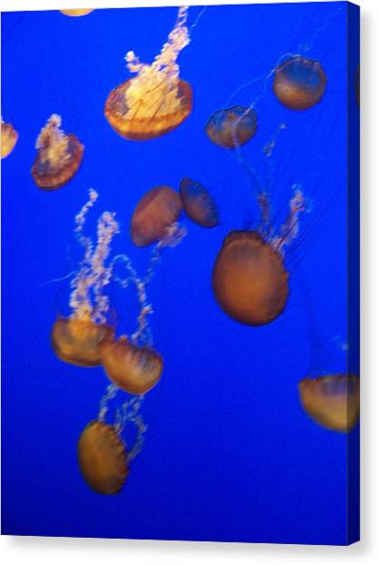 Jelly Fish 2 Canvas Print by Dawn Marie Black