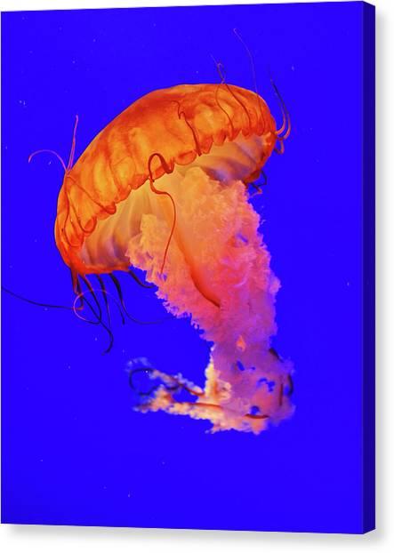 Hong Kong Canvas Print - Jelly Fish by Davidhuiphoto